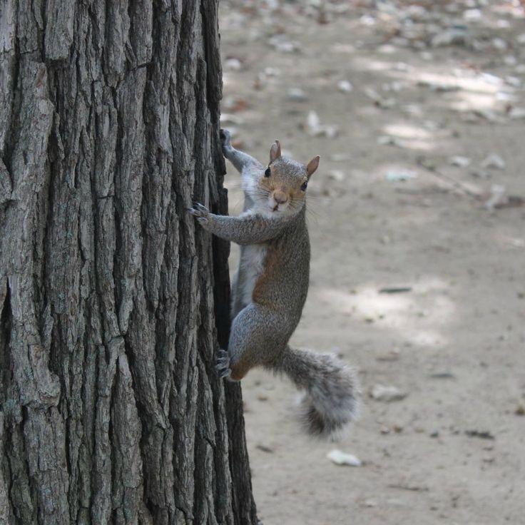Got you you slippery little sucker.  Squirrel in Malcolm X Park, Washington D.C.