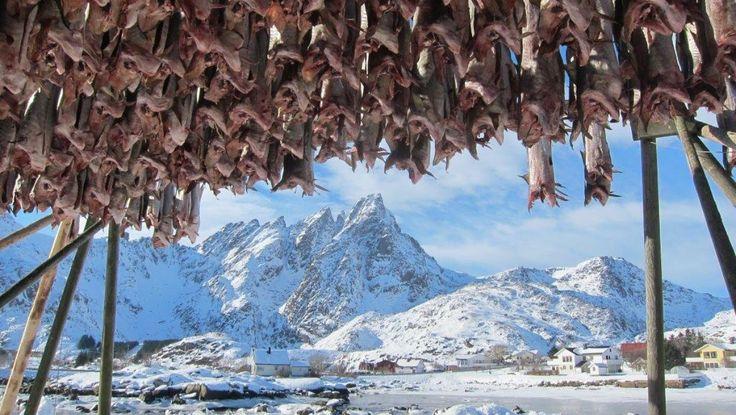 Godt vær for tørrfisken. Fra Ballstad - Her fra Ballstad i Lofoten. - Foto: John I Berg /
