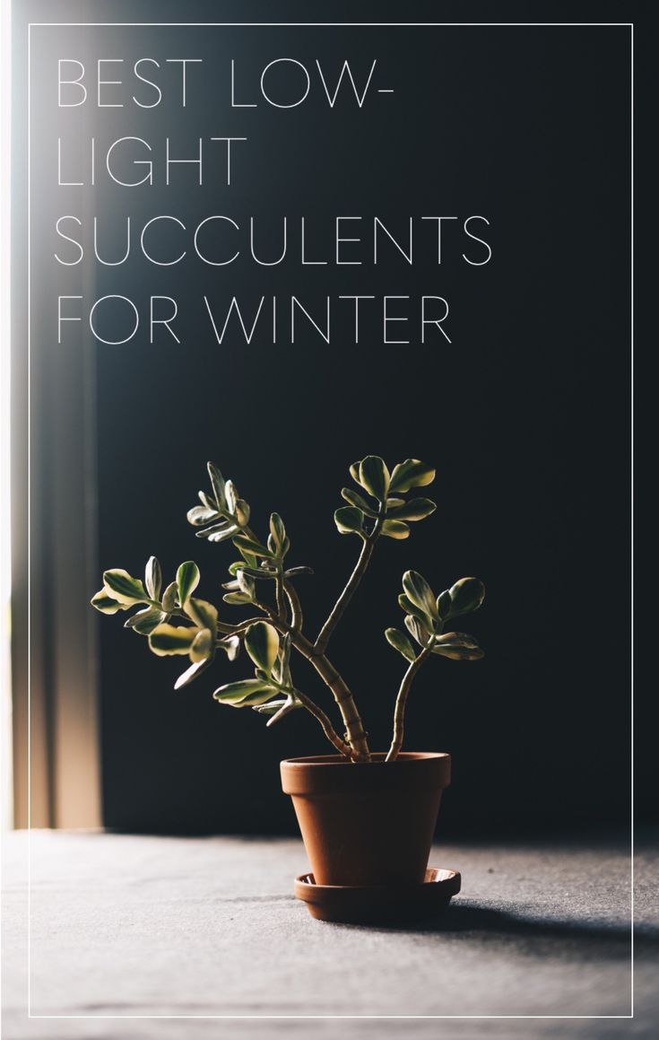 It's winter! And you know what that means: everyone is generally more pissed off, there's a lot less leg-shaving happening, and yes, your plants aren't getting as much as light! Winter can be a rou…