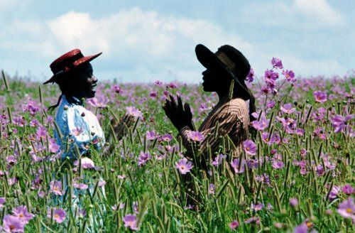 the colour purple by Alice Walker - love the book but really loved the movie