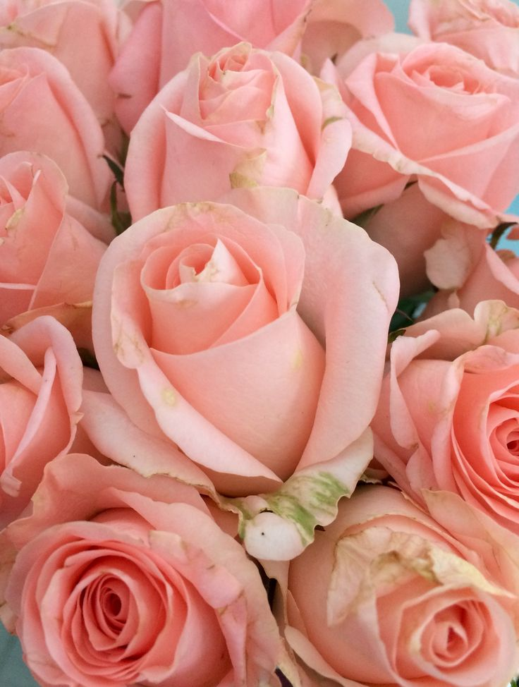 Картинки с розами самые красивые новинки