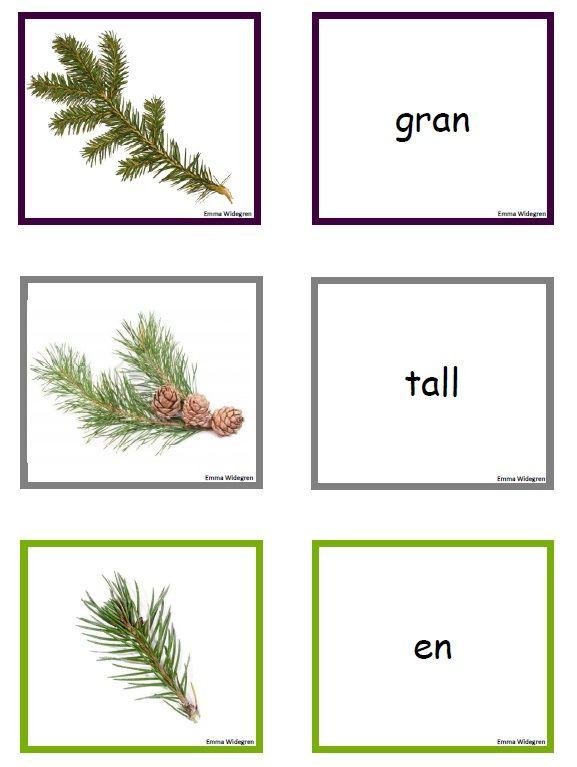 Tema träd – trädmemory