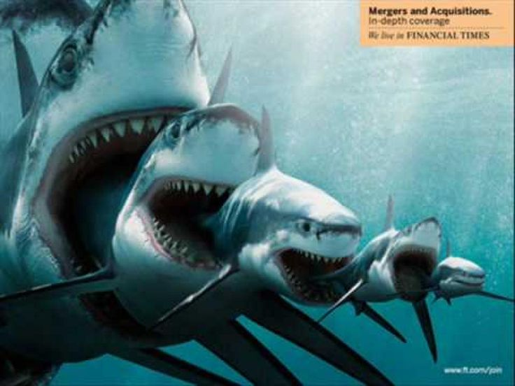 How Many Sharks Are In the Ocean? | Wonderopolis