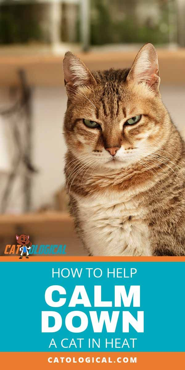 16b661b5053192ece3219f0a1e88ad80 - How Do You Get A Cat To Calm Down