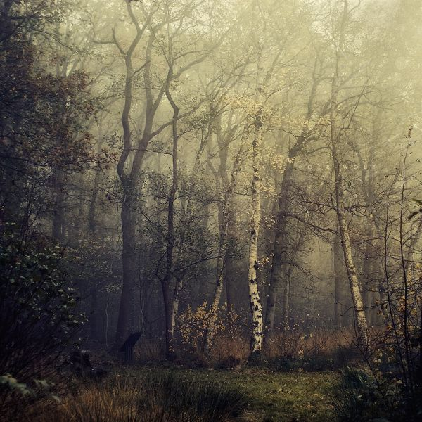 }}}{{[[)()(Grey And White, Stunning Photography, Foggy Forests, Wood, Dreams, Art, Impressionist Painting, Trees, Nature Photography