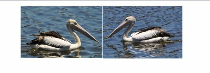 Two photos side by side in word - InfoBarrel Images