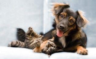 To nydelige bestevenner ❤️ Frihetens arv, www.frihetensarv.no, Katt, Morsom katt, Søt katt, Hund, Hundetrening, Morsom hund, Hund og katt, Kjæledyr, Søt hud, Vakker hund, Valp, Kattunge, Lek, Quotes