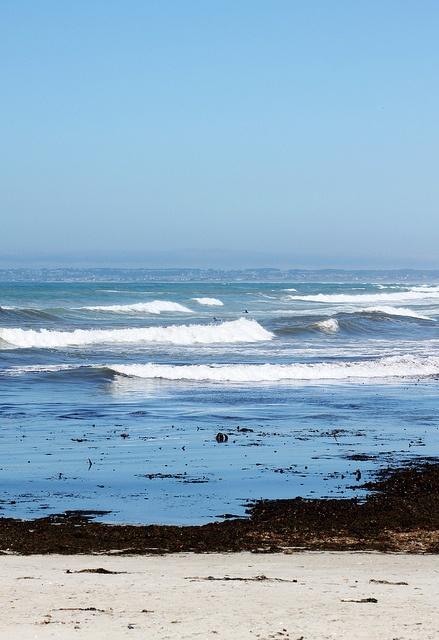 La Torche  #surf