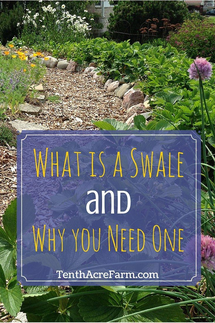 What is a Swale and Why You Need One: Swales are an important tool for irrigating the garden, mitigating stormwater runoff, and reducing erosion.
