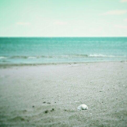 Schelp•strand•zee
