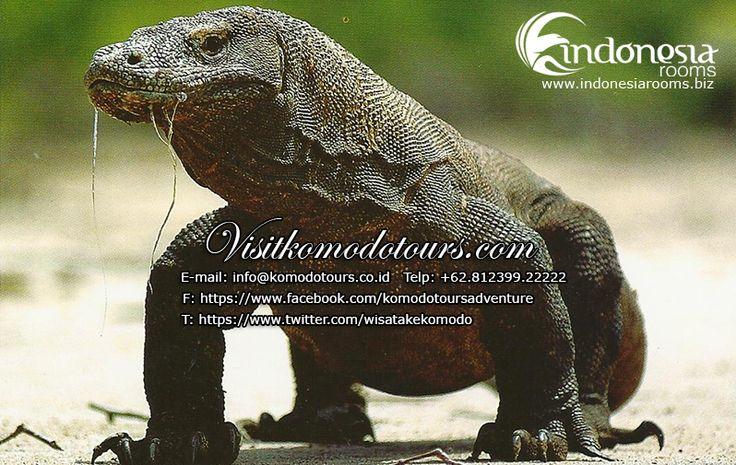 www.visitkomodotours.com provides and assist you on your trip to Komodo Flores and beyond. We are certain that you'll enjoy your trip maximally. ENJOY YOUR HOLIDAYS WITH US  RESEVATION CONTACT:  Marcelino Operation Manager ----------------------------------------- KOMODO TRANS WISATA www.visitkomodotours.com Mobile: +62.81239922222 PIN BB: 7ED9DEE2