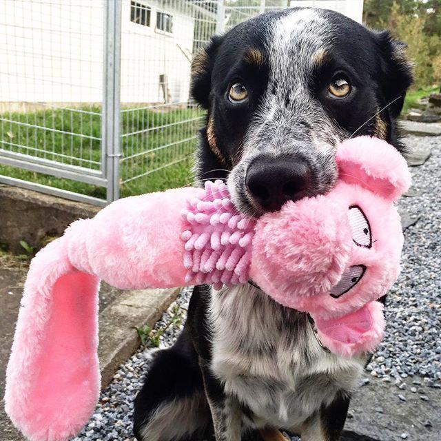 A cute little dog that supports Cancer Society. Good job! #HookedOnHööks I www.hookseurope.com I nadhalie