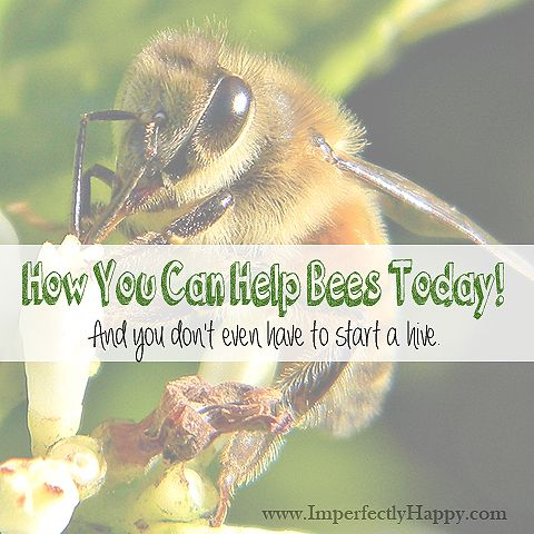 How You Can Help Bees Today! And you don't even have to start a hive. | by ImperfectlyHappy.com