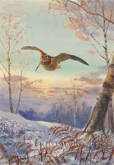 Woodcock in Flight, a Winter Sunset by John Cyril Harrison (1898-1985)
