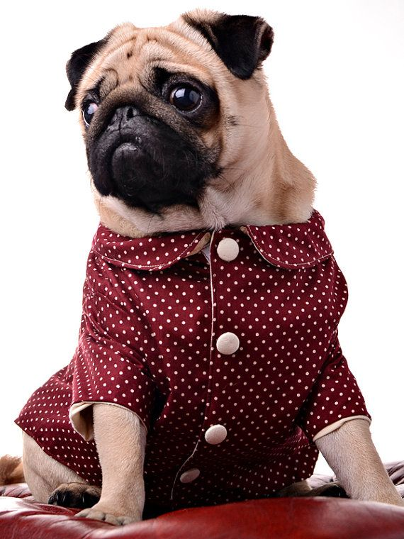 Everyone should make an effort for the Christmas party. Dog Jacket by Dogtailor on Etsy, £29.99.