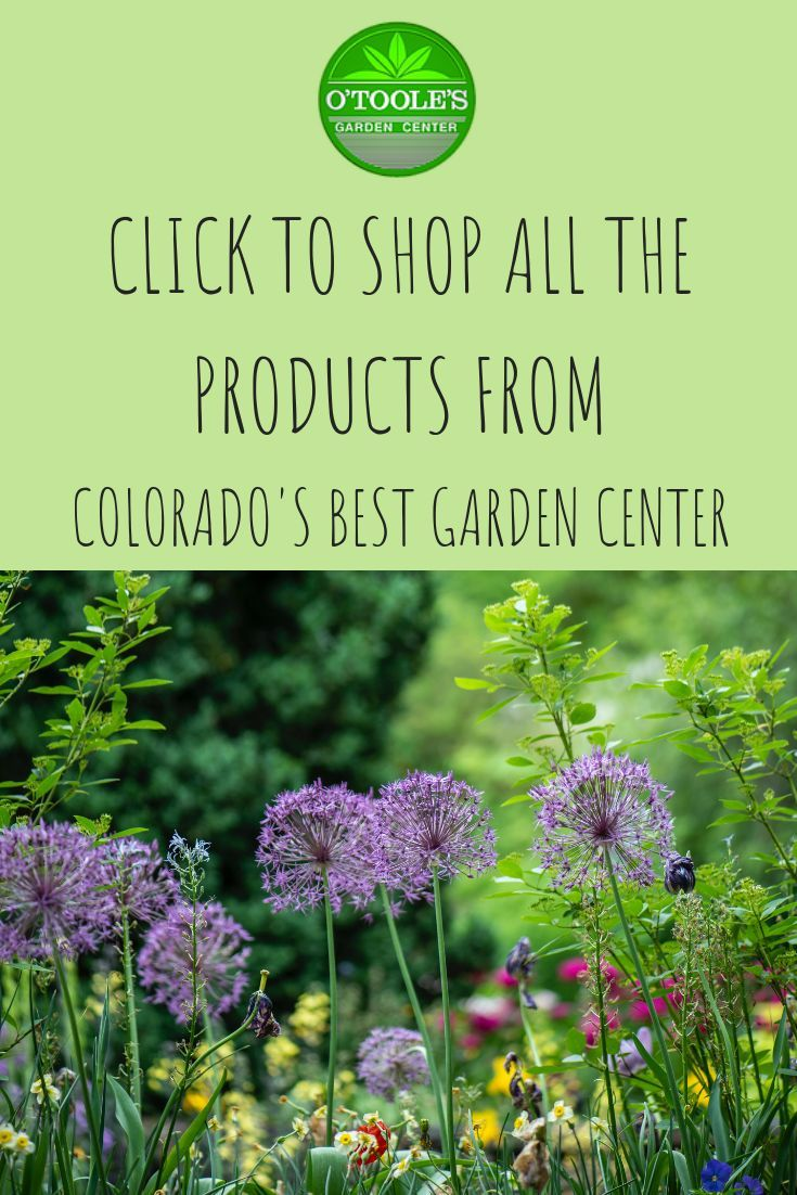 O Toole S Garden Center Is A Family Owned And Operated Gardening Center In Colorado Now All Your Favorite Gardening P Amazing Gardens Garden Center Lawn Care