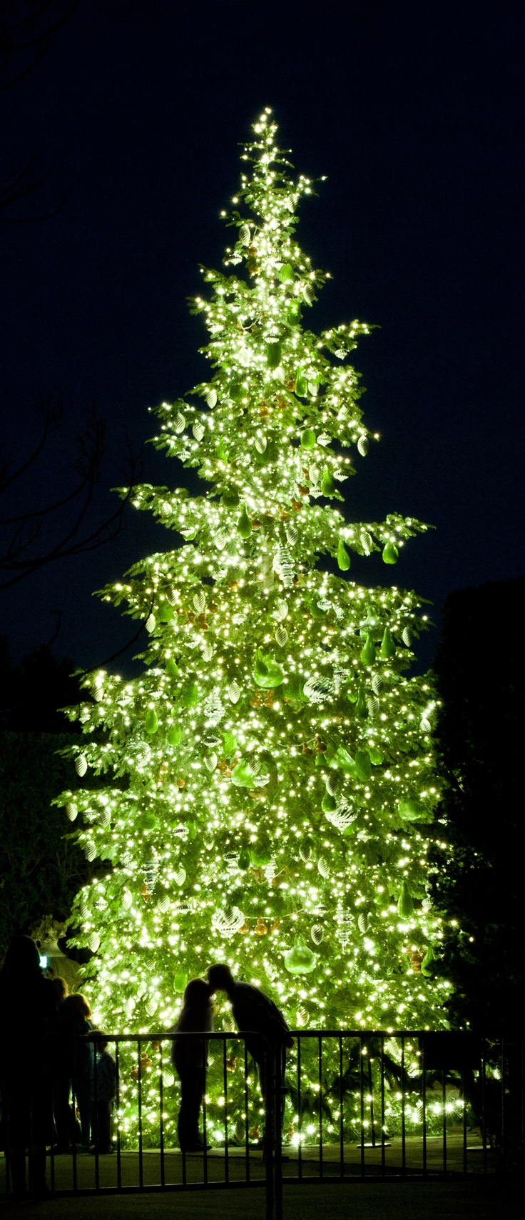 1000 images about christmas at longwood gardens on - Places to eat near longwood gardens ...