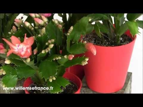#Cactus de Noël orangé http://www.youtube.com/watch?v=R2Aj_pGyEYE