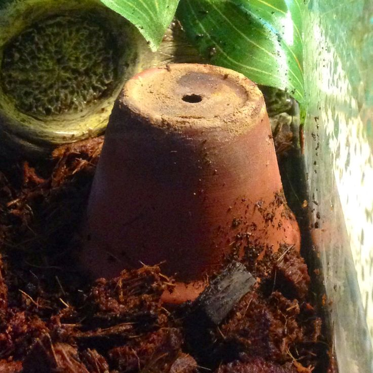 Clay Humidifier - A sponge stuffed into a mini pot will gradually release moisture into the air, helping to maintain humidity in a tropical terrarium. Just soak the entire sponge + pot as needed. The pot will lighten in color when dry. Cheap, attractive, and gives small animals an additional climbing structure!
