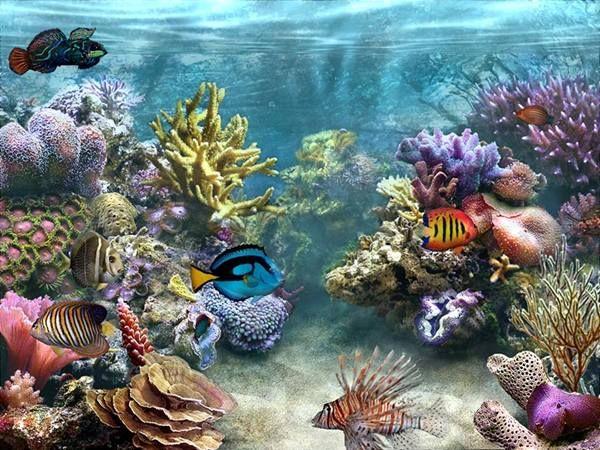 Tropical Reef Fish HD desktop wallpaper : High Definition ...