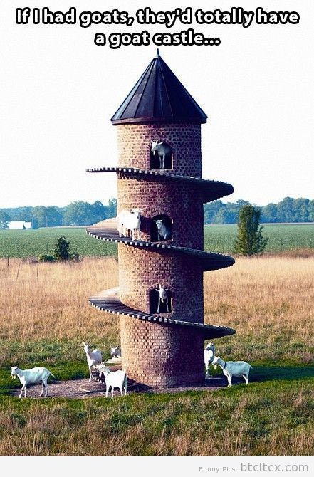 If I had goats… | Funny Pictures