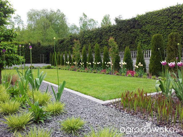Moja codzienność - ogród Oli - strona 1409 - Forum ogrodnicze - Ogrodowisko
