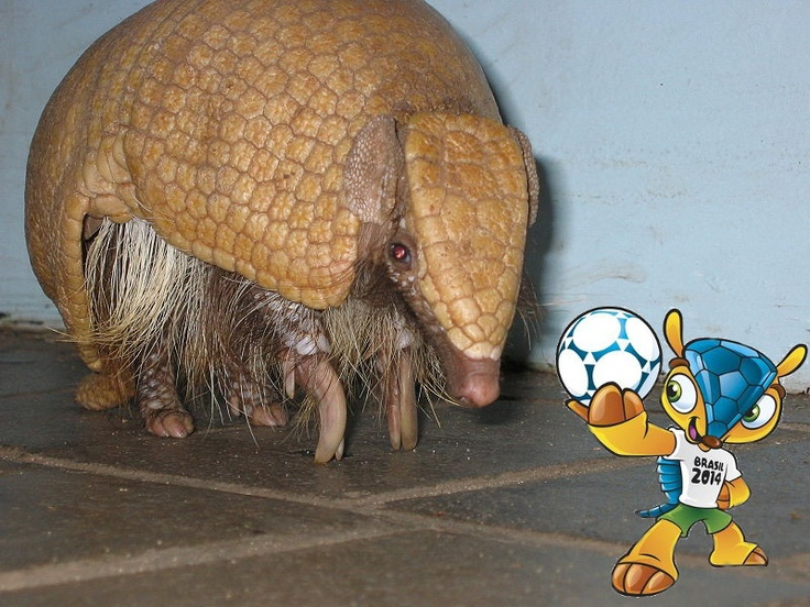 armadillo the strange animal of south america Here are 22 animals you didn't know exist  the pink fairy armadillo is approximately 35-45 inches  the maned wolf is the largest canid in south america.