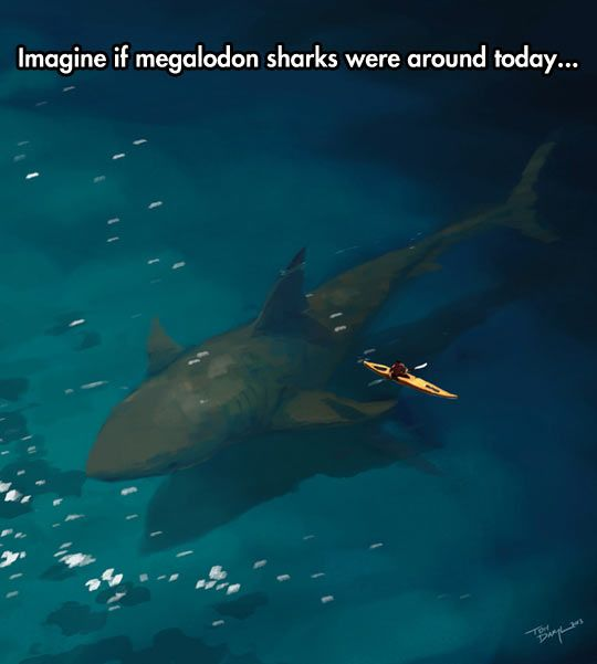 Megalodon Sharks: Imagine if they were around today