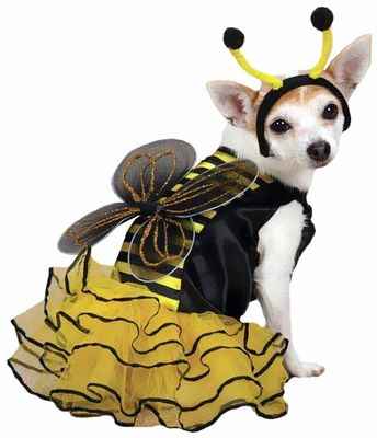 Everyone will be buzzing about our adorable Casual Canine Bee Mine #Dog Costume this Halloween!