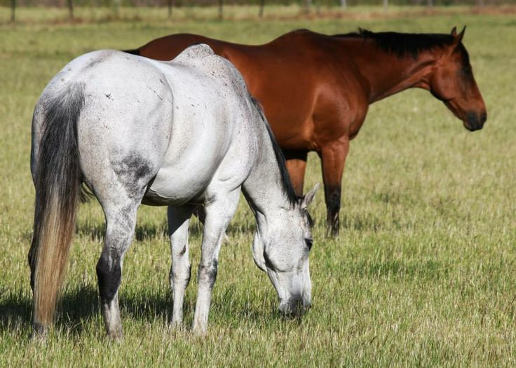 2007 Melbourne Cup winner EFFICIENT and his paddock mate the champion ZIPPING