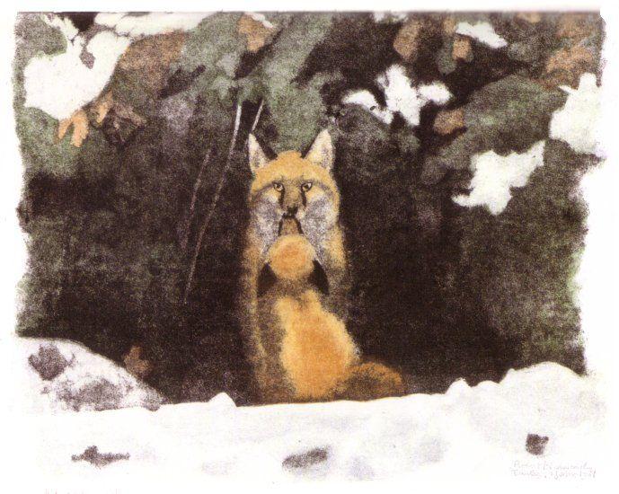 Robert Hainard La renarde est sortie la première. Majestueux le mâle s'encadre dans l'ouverture du terrier. elle se coule contre lui, museau à museau. Aire-la-Ville 2 janvier 1981