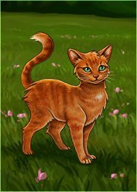 Redfeather   What is Your Warrior Cat Name? - Quiz   Quotev