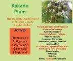 Kakadu Plum grows wild in the upper parts of the Northern Territory in Australia. Kakadu Plum boasts the highest level of Vitamin C known, in any natural plant worldwide.