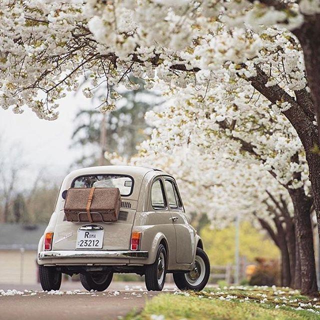 Spring break. FIAT 500