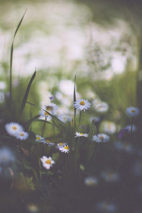 daisies #flowers #nature #photography https://www.uksportsoutdoors.com/product/vaude-kabru-womens-jacket-light-vest/