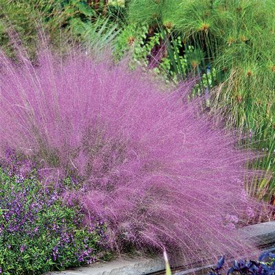 28 best plastic awareness images on pinterest plastic for Common ornamental grasses