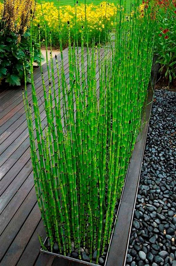 Planters-Baby Bamboo