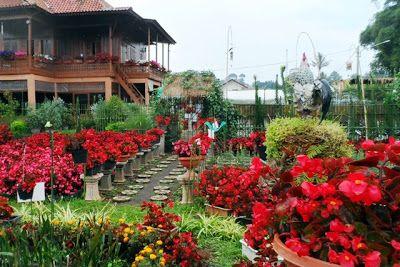 PERGIPEDIA  - Taman Bunga Begonia, Area Wisata Favorit Dan Terjangkau Di Bandung . Bandung adalah...