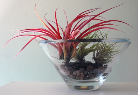 spinifex and flax instead of air plants.