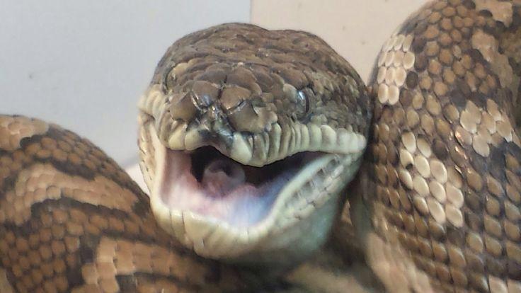 Smiley Snake