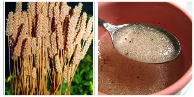 Imagens: Google/Montagem: Daniela Cravari       Psyllium é uma fibra extraída da casca das sementes de uma planta, a Plantago ovata, que c...
