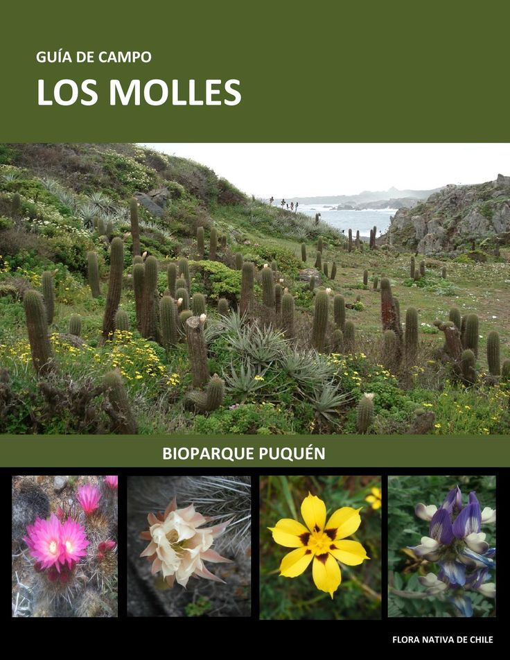 Lo Molles, Chile and the Biological Reserve (Puquen)