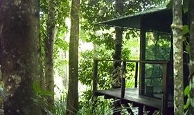hut in the treetops