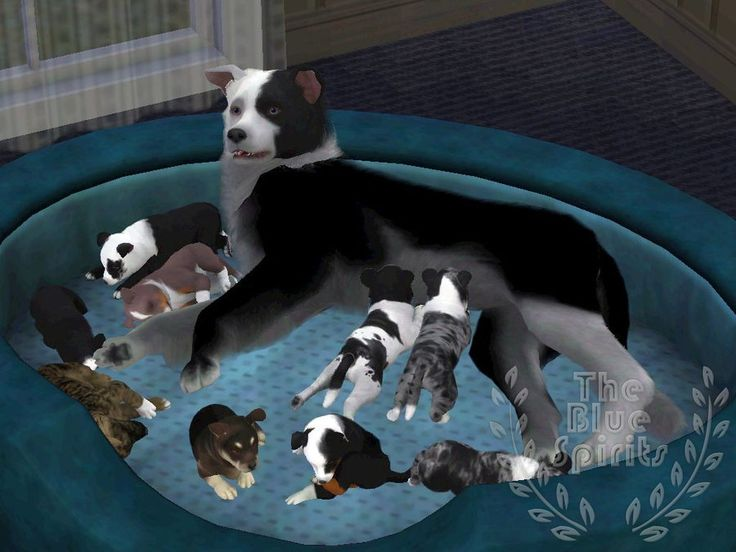 Sims 3 Pets dogs | litter puppies and others by SpirityTheDragon