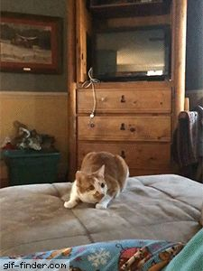 Ninja Cat Makes Amazing Catch | Gif Finder – Find and Share funny animated gifs