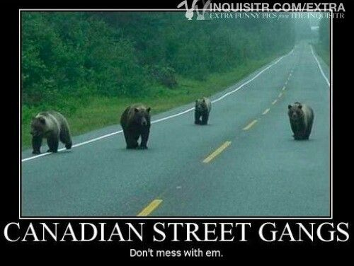 don't mess with this gang! lol