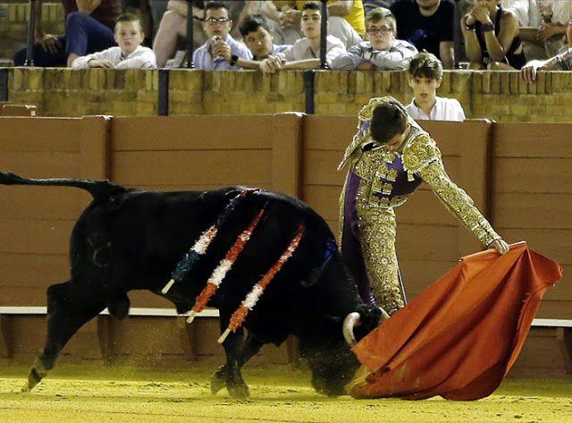 BUENA IMPRESIÓN DE JOSÉ FERNANDO MOLINA EN SEVILLA  José Fernando Molina Noticias Albacete Noticias Toros Real Maestranza Caballería Sevilla