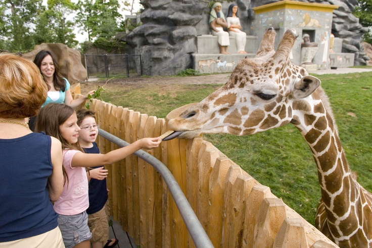 Public feeding opportunities are available at the Giraffe Encounter, an elevated viewing platform overlooking the giraffe habitat, bringing guests to eye level with the Zoo's tallest creatures from late spring through early fall.