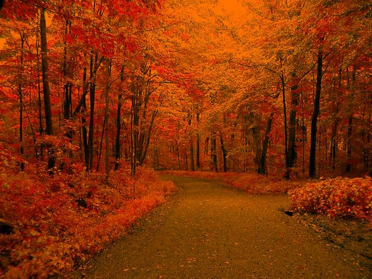 Fall Definition: 39 Best Fall Pictures Images On Pinterest