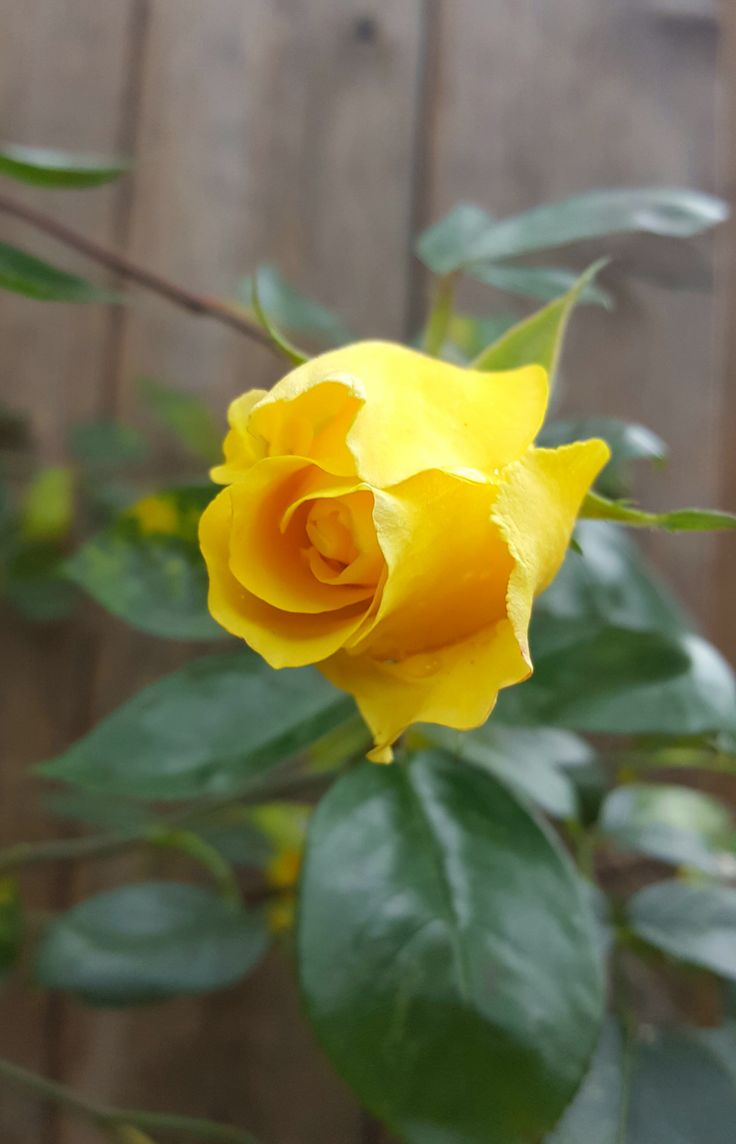 "djinnature: ""Sunshine in a Flower """
